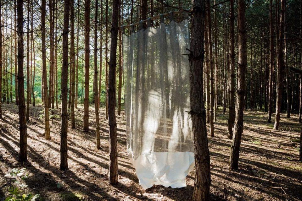 na zdjęciu widać las, w ktorym wisi zasłona