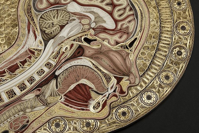 Papierowa anatomia by Lisa Nilsson